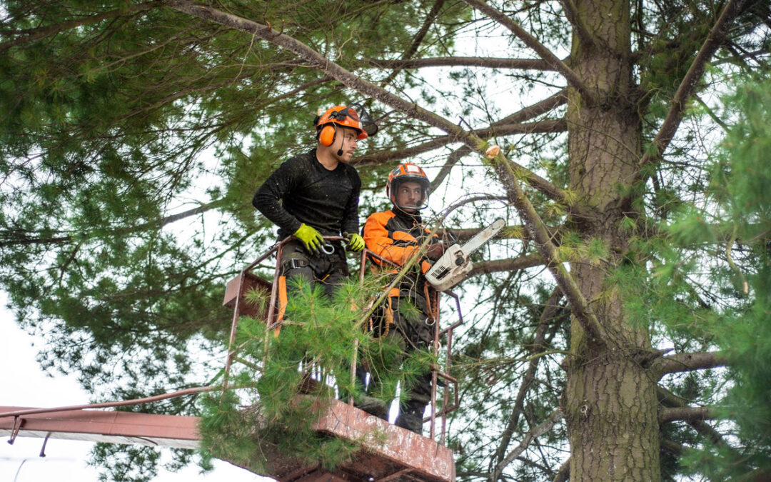 How to Hire an Arborist