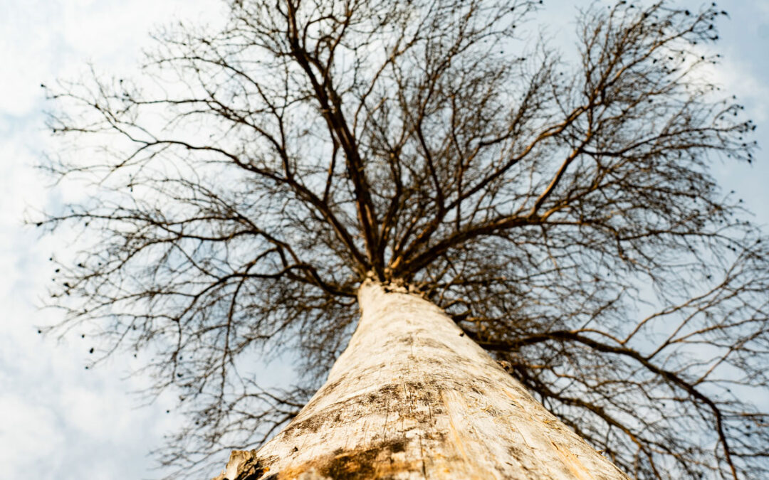 How Do I Know When a Tree is Sick?